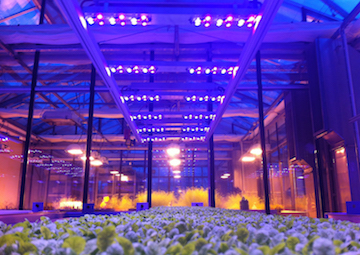 Lichtsysteme in der Pflanzenproduktion